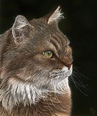 Wildlife artist-Chat de Garde