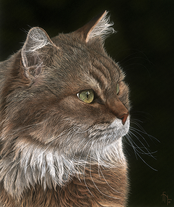 Wildlife artist-Chat de Garde