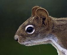 Wildlife artist-Le Joueur des Forets