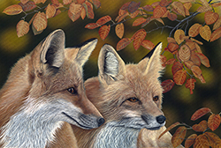Wildlife artist-Les Comperes