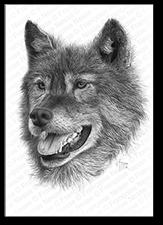 Wildlife artist-Le Mentor